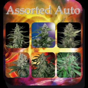 Buddha Seeds Assorted Auto female Mix