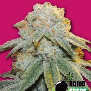 Bomb Seeds Bubble Bomb