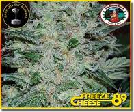 Big Buddha Seeds Freeze Cheese '89 female Seeds