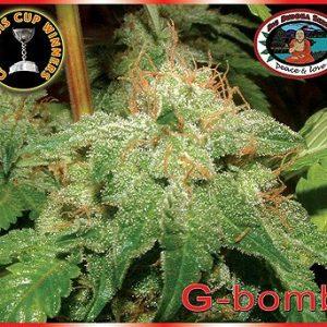 Big Buddha Seeds G-Bomb female Seeds
