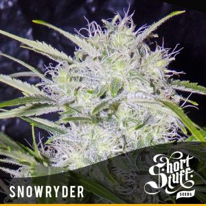 shortstuff seeds Snowryder female