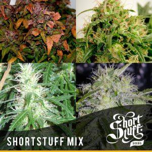 shortstuff seeds ShortStuff mix female