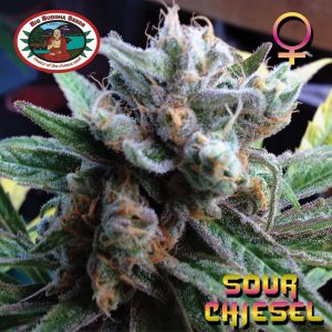 Big Buddha Seeds Sour Chiesel female Seeds