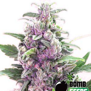 Bomb Seeds THC Bomb