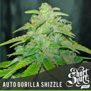 Shortstuff seeds Auto Gorilla Shizzle female