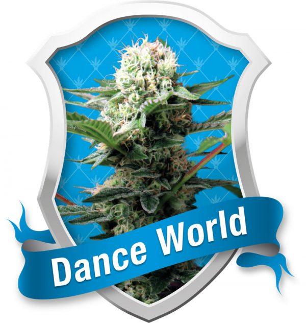 Royal Queen Seeds Dance World female Seeds