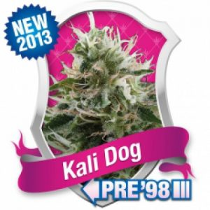 Royal Queen Seeds Kali Dog female Seeds