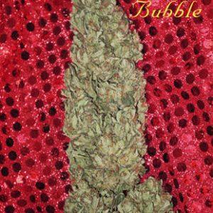 Mandala seeds Hubble Bubble female