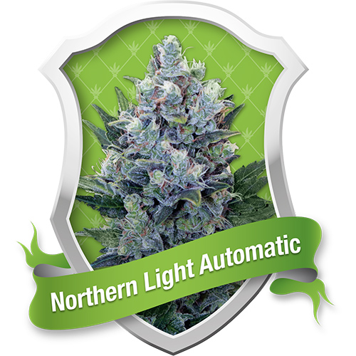 Royal Queen Seeds Northern Light Automatic female Seeds