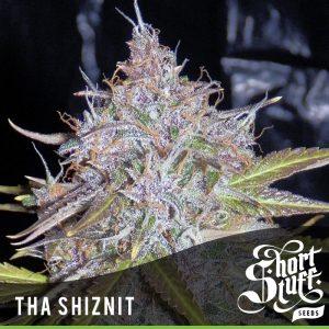 shortstuff seeds Auto Tha Shiznit female